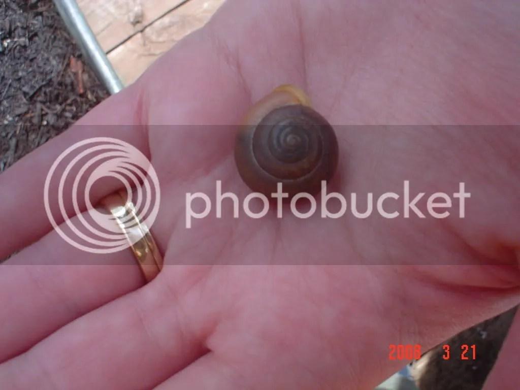 Find a snail