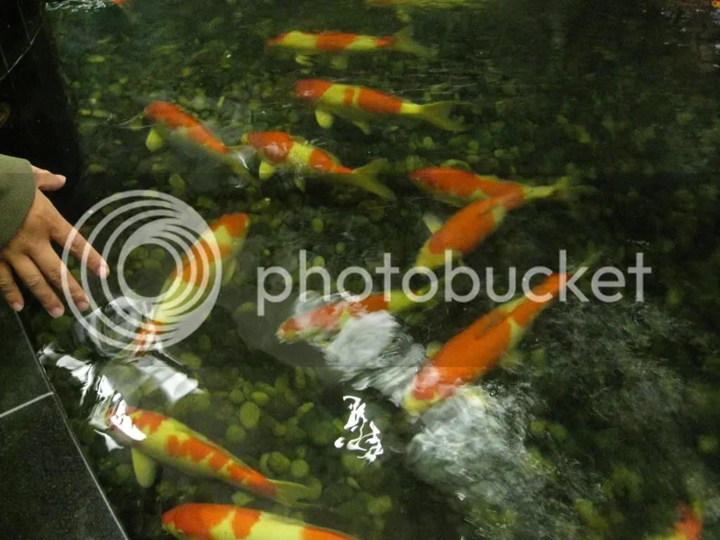 Here fishy fishy fishy~~