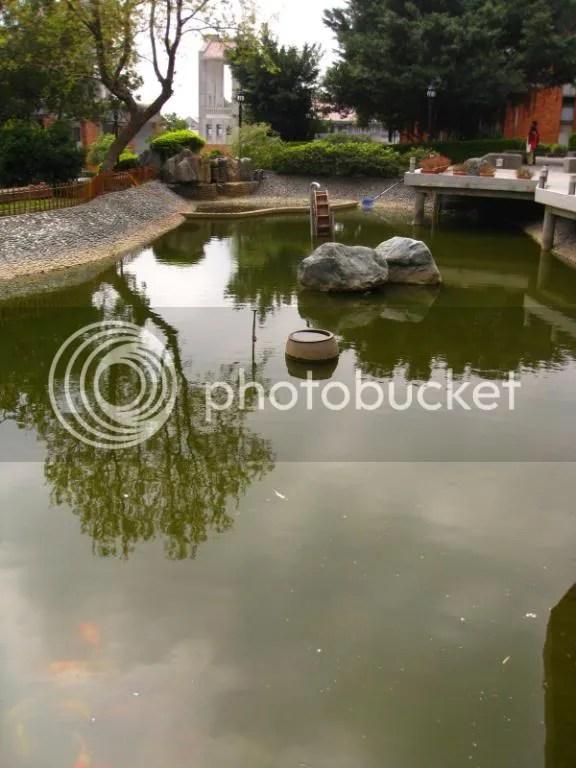 Pond, had like big~small koi.