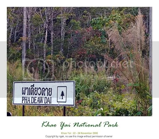 42KhaoYaiNationalPark.jpg picture by jade_ornament