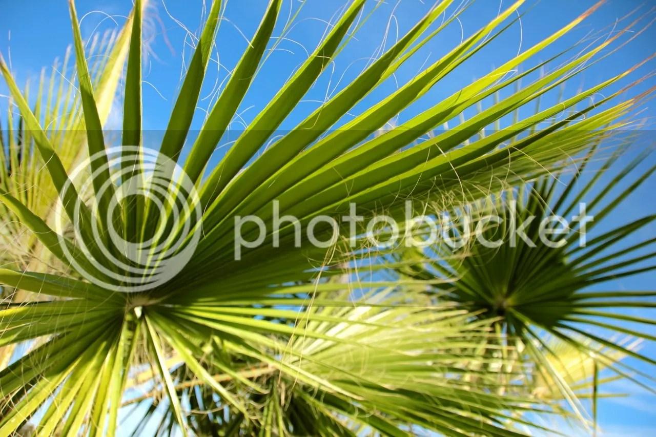 https://i1.wp.com/i181.photobucket.com/albums/x35/jwhite9185/Larnaca/file-111.jpg