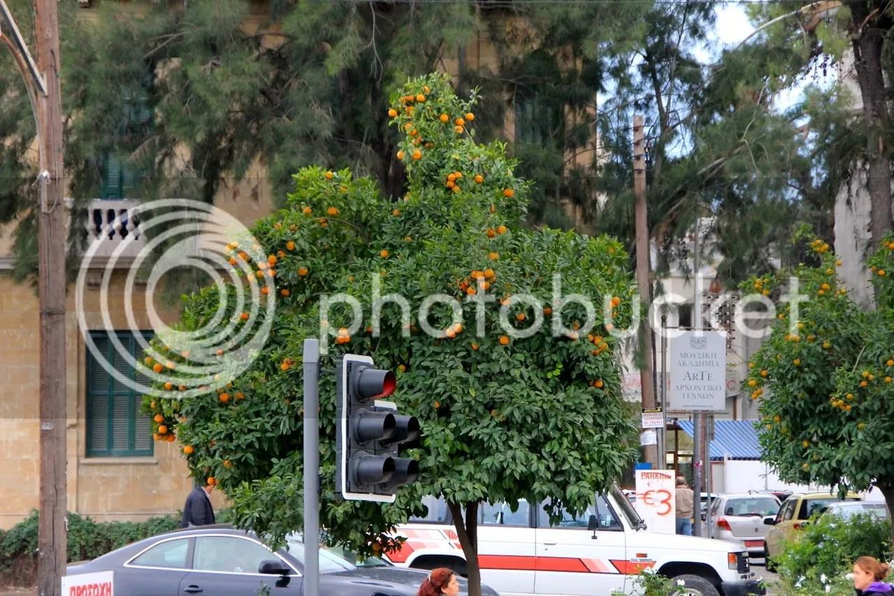 https://i1.wp.com/i181.photobucket.com/albums/x35/jwhite9185/Larnaca/file-141.jpg