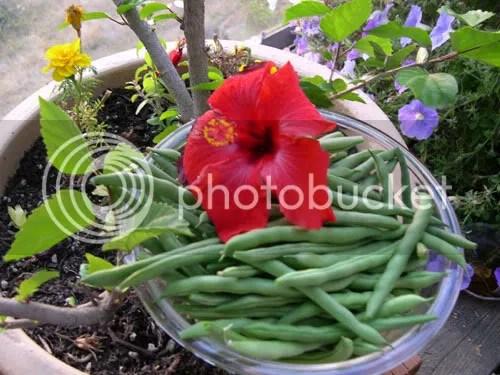 beans8