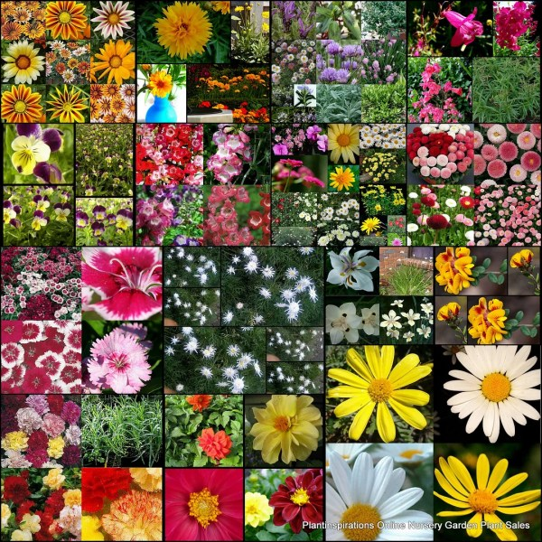 cottage garden plant list Cottage Garden Plants List | Fasci Garden
