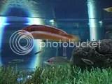 Valencia, Oceanográfico - Fisch