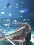 Valencia, Oceanográfico - Fische