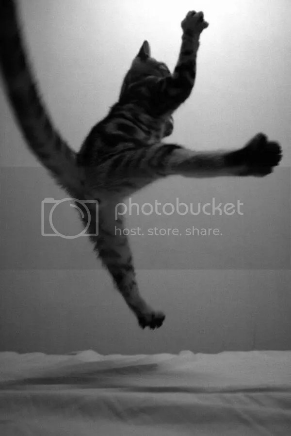 photo Flying_Attack_Cat.jpg