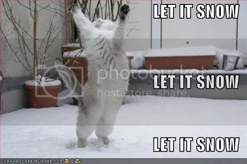 let it snow lol cat Pictures, Images and Photos