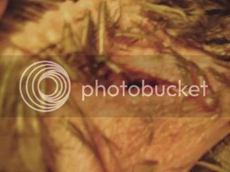 https://i1.wp.com/i187.photobucket.com/albums/x204/chicklady/crop3.jpg