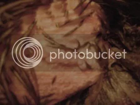 https://i1.wp.com/i187.photobucket.com/albums/x204/chicklady/crop4.jpg