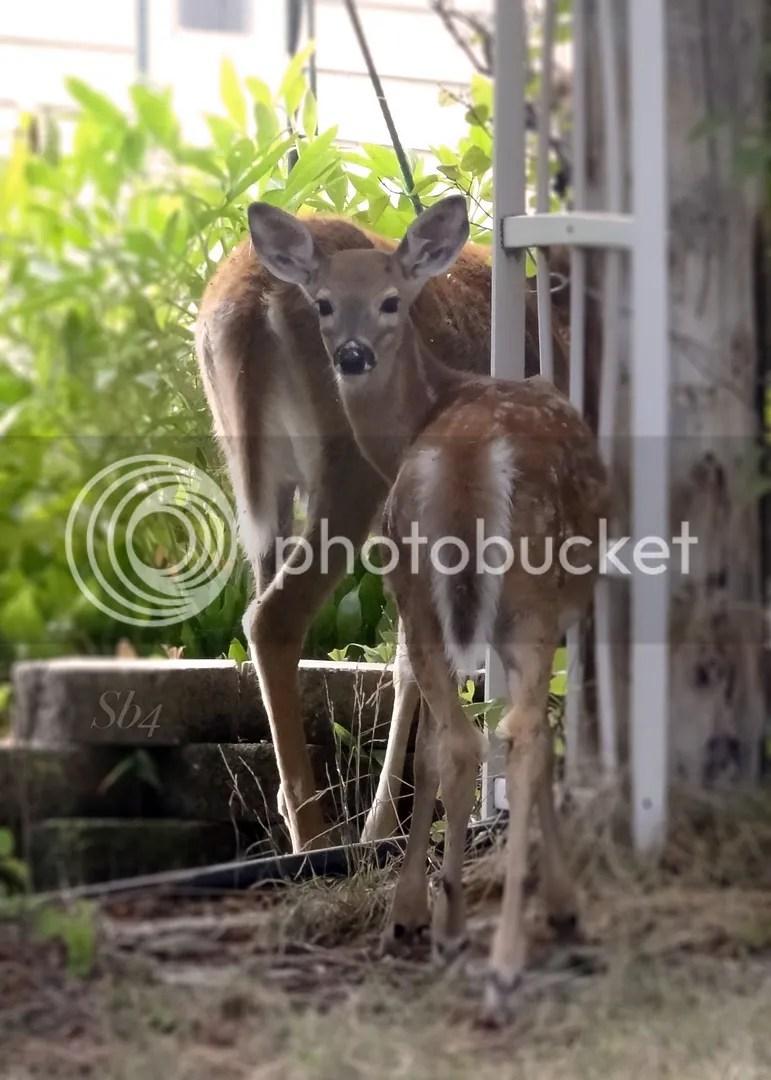 photo Bambi WM_zpsxqx9iq3w.jpg