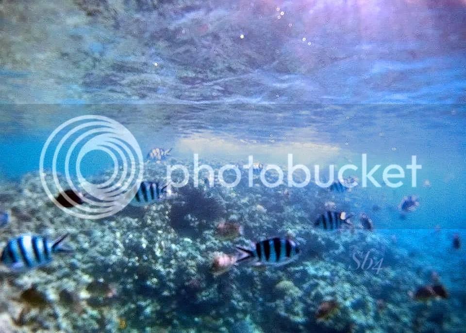 photo Snorkeling 2 WM_zpshegen68q.jpg