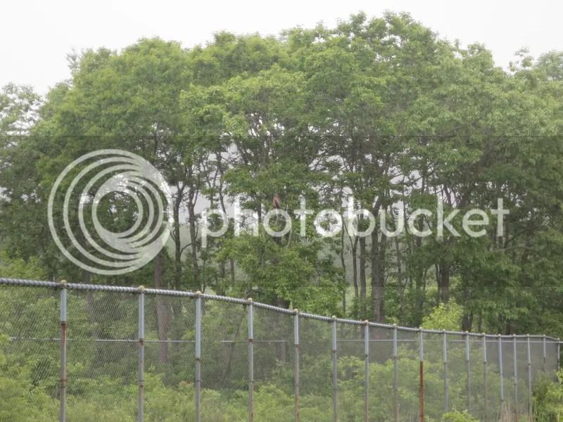 Kushiro crane reserve