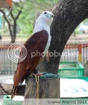 Hawk Eagle 1