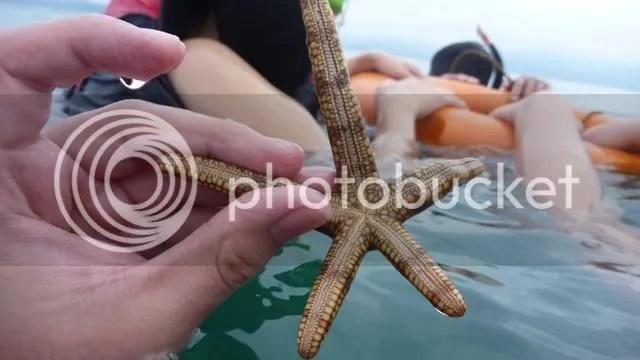 DOS PALMAS_Starfish