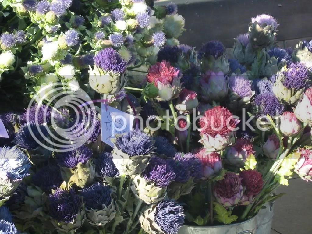 Scottish National Flower