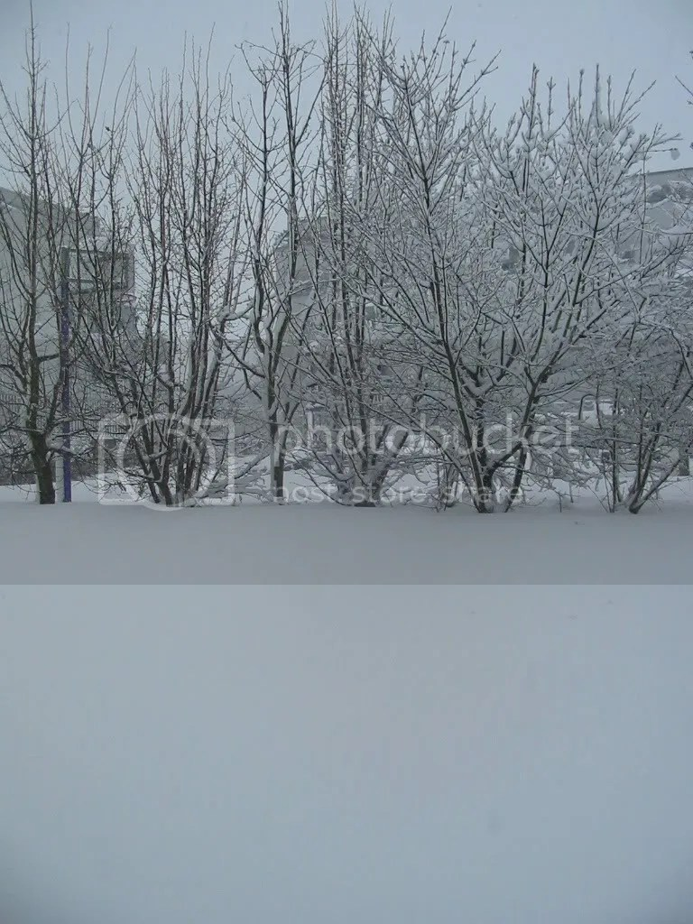 Snowfall 2008 Mar 21