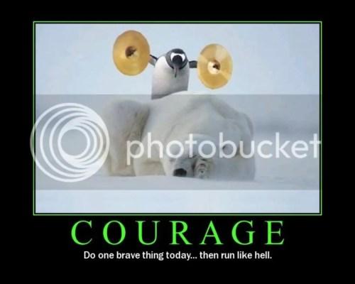 Self confidence nyali berani penguin beruang