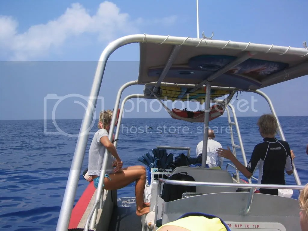 Dolphin Discoveries Boat