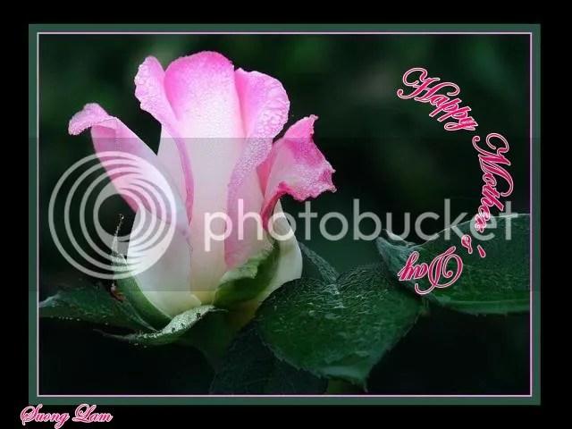 https://i1.wp.com/i195.photobucket.com/albums/z149/minh40/Ngay%20Cua%20Cha%20va%20Me/HappyMothersDayhoahong.jpg