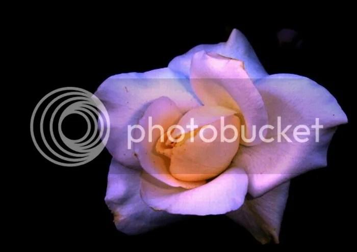 https://i1.wp.com/i195.photobucket.com/albums/z149/minh40/ToiYeuMauTim/3736087.jpg
