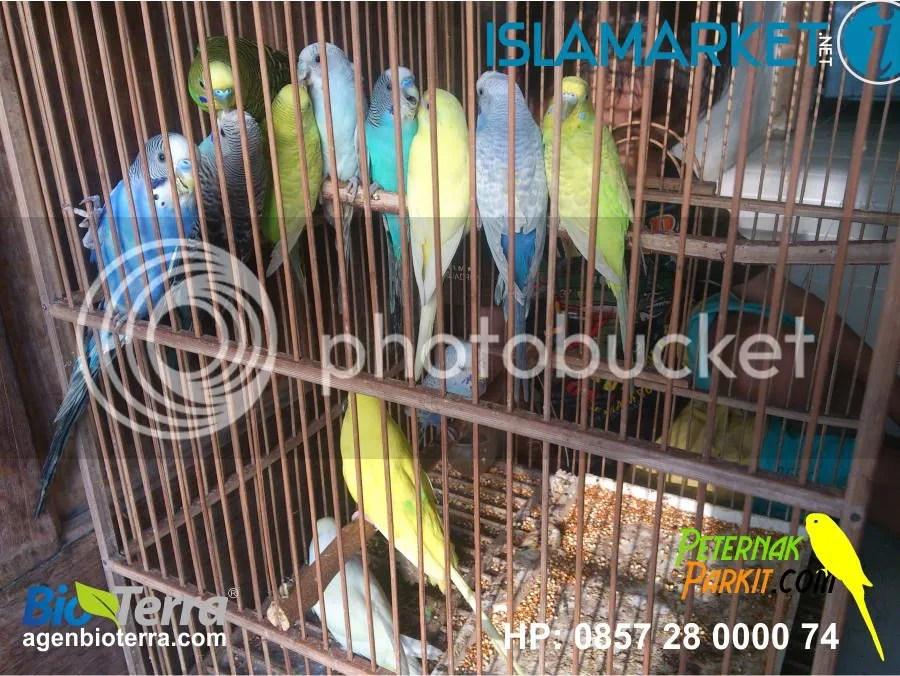 Pembeli ke 30 | Hj. Siti Aminah - Semarang