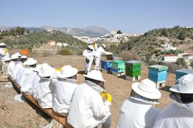 Bee husbandry in Malaga province, Spain.