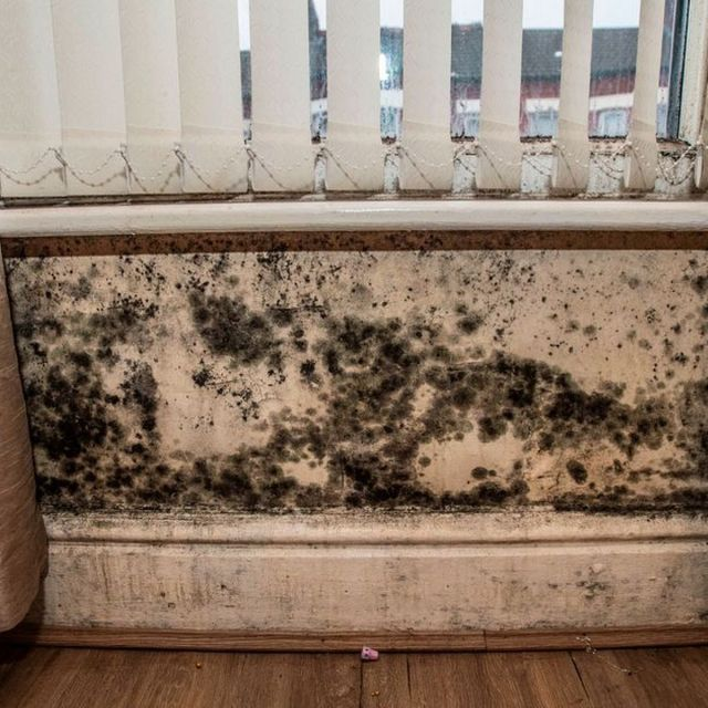 How to get rid of mould in your home and prevent it coming back