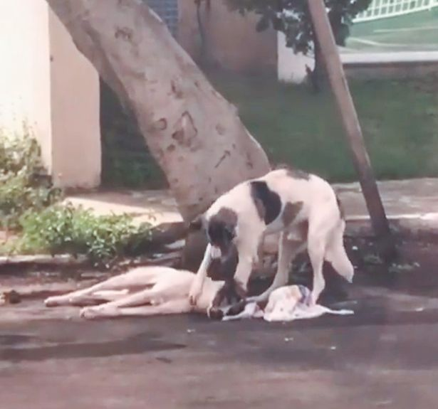 The dog remained by its side until help arrived the following day