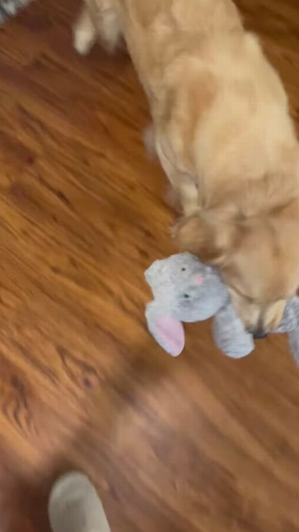 She was in stitches when she heard her pet 'talking like Chewbacca'