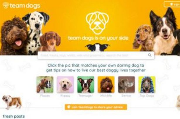 0 Team Dogs logoJPGjpG