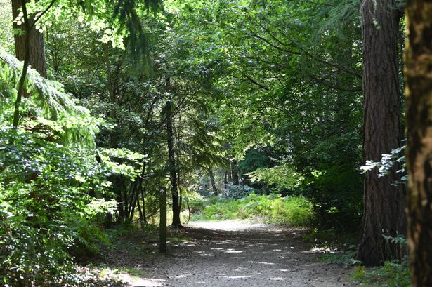The huntsman, war horse are just a few of the 'biggies. Alice Holt In Farnham Is An Incredible Forest With Superb Family And Dog Friendly Walks Surrey Live