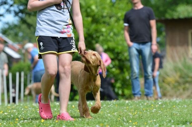 Although it might take a little longer, you can still train an adult dog