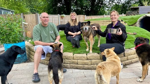 Emma Billington from Dogs 4 Rescue, Maria Slove from Rescue Trouble and Dave Higgs from Olson Animal Trust
