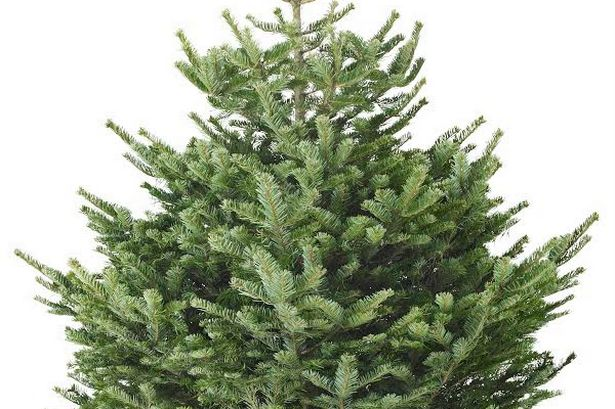 Ikeas 5 Christmas Trees Could Be The Cheapest In