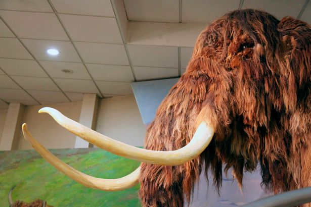 The woolly mammoth diverged from the steppe mammoth about 400,000 years ago in east Asia