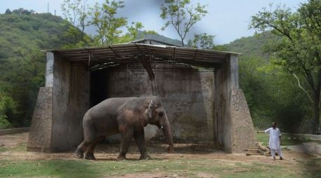 """Kaavan"" The Elephant Finally Gets a New Home - After kept in chains for 35 years"