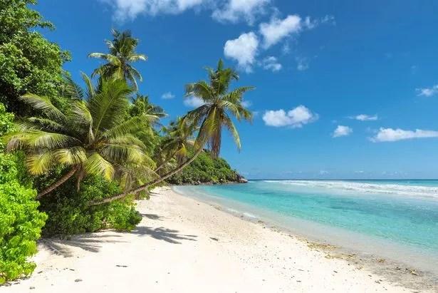 Kokospalmen an einem Sandstrand auf den Seychellen mit türkisfarbenem Meerwasser an einem sonnigen Tag