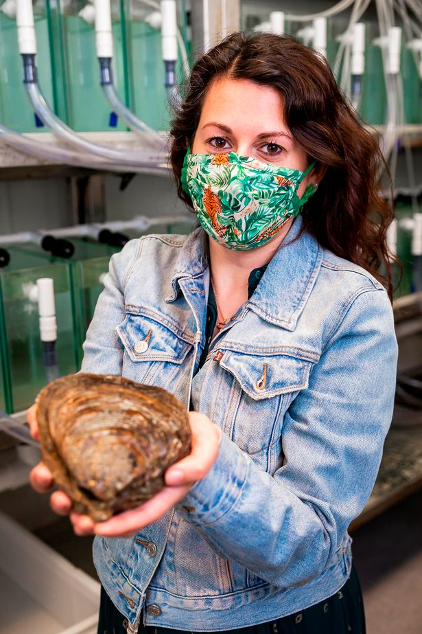 Nada Farhoud visits the UK's first oyster restoration hatchery at the Institute of Marine Sciences located at Langstone Harbour