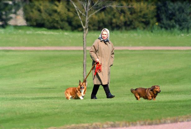 The Queen with two of her corgis at Windsor Castle