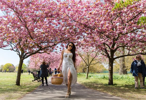 Visitors enjoy the cherry blossom in Greenwich Park
