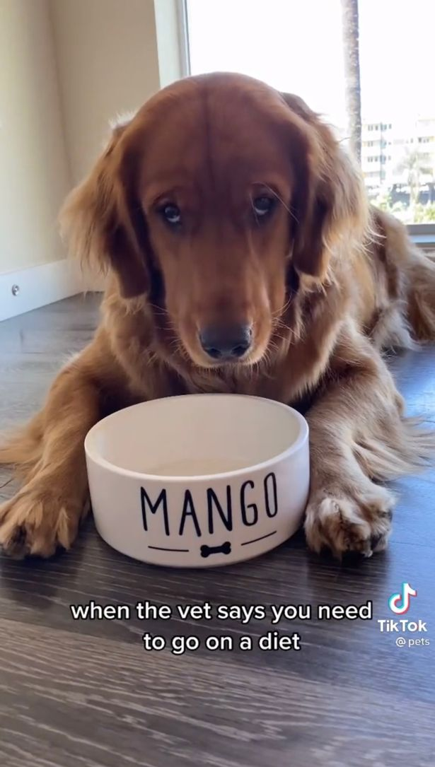 Mango's adorable eyes captured the hearts of viewers