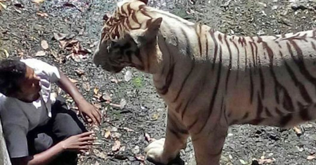 https://i1.wp.com/i2-prod.mirror.co.uk/incoming/article4308408.ece/ALTERNATES/s1200/PAY-Tiger-attacks-and-kills-a-vistor-at-New-Delhi-Zoo.jpg?w=1060&ssl=1