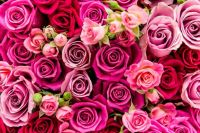 cheapest place to buy roses on valentines day