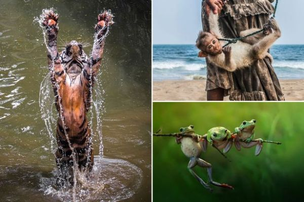 Animal magic caught on camera in contest to find the best ...