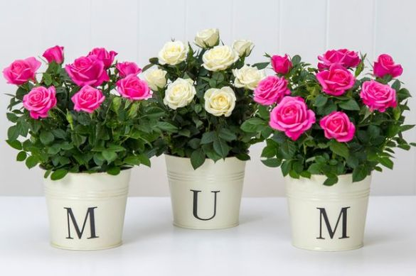 Mother s Day flowers  11 best deals including 50  off  free     Treat your mum to some pretty flowers this spring