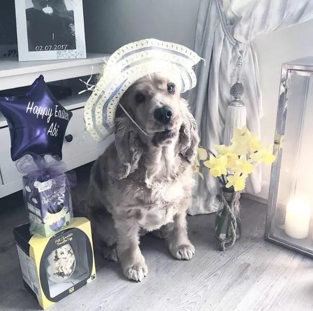 Zoflora Fresh Home Pets