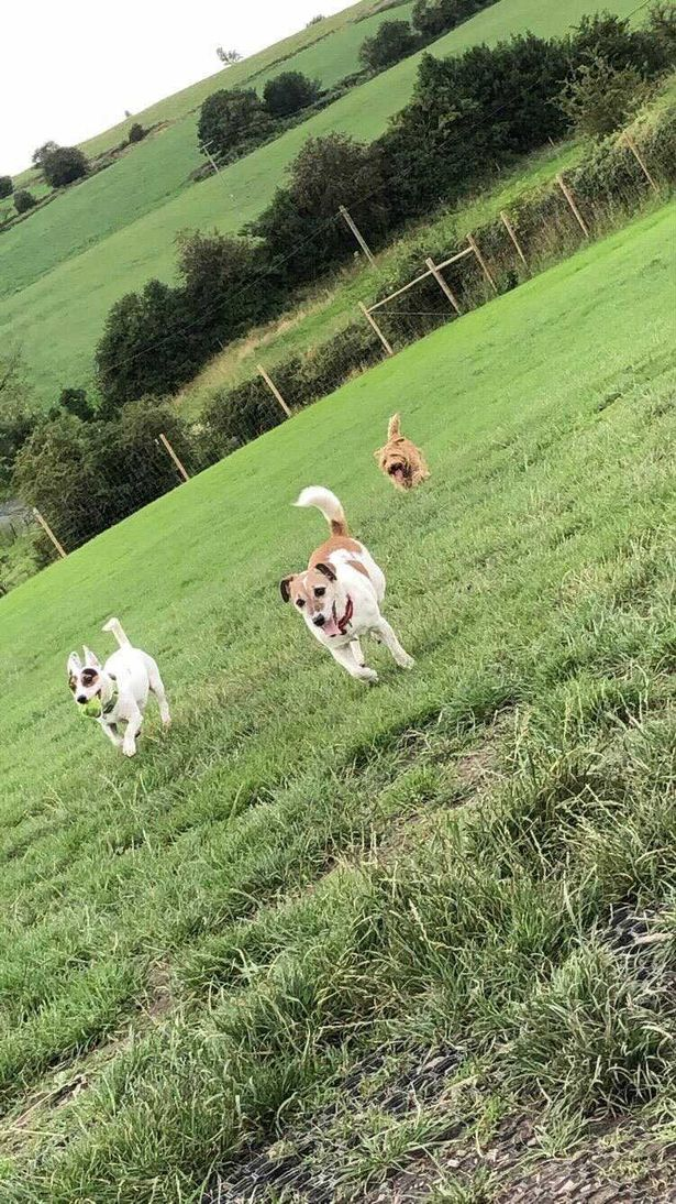Dogs at Paddocks For Paws
