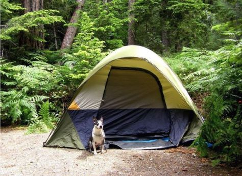 Everything you need to know about camping with your dog
