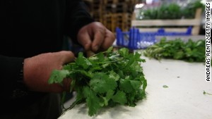 FDA bans some cilantro from Mexico, cites human feces in fields